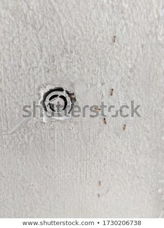 Matrimonio hormigas ilustración boda amor corazón Foto stock © adrenalina