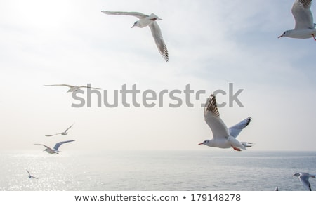 Seascape with sea, cloud and flying seagull Stock photo © fresh_5265954