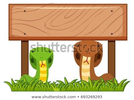 два · Динозавры · иллюстрация · горные · искусства - Сток-фото © bluering