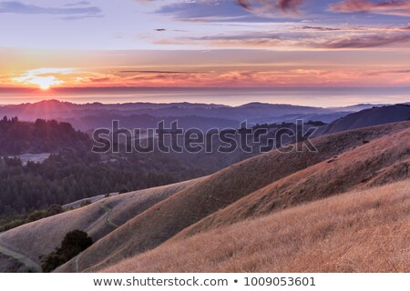Northern California Rolling Hills Turn Gold in Autumn Sunset. Stock photo © yhelfman