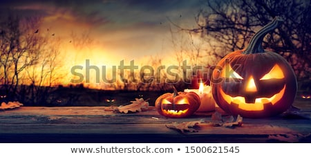 Halloween Pumpkin in the forest on a dark background. Stock photo © serg64