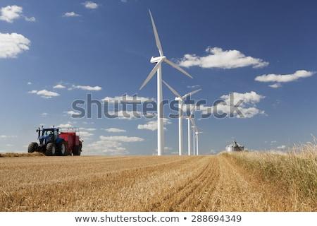 Cena campo ilustração jardim fundo energia Foto stock © colematt