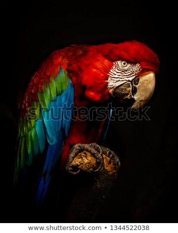 Papegaai natuur frame illustratie blad achtergrond Stockfoto © bluering