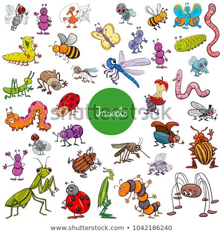 Vector cartoon insect clip art cute neushoorn Stockfoto © VetraKori