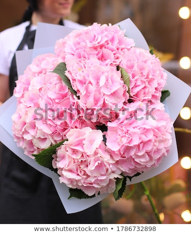 Young woman on the background of light Pink hydrangea blooming in the garden Stock photo © galitskaya