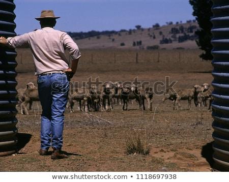 Drought in Australia Stock photo © lovleah
