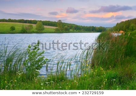 Gölet çiçek su ağaç doğa Stok fotoğraf © manfredxy