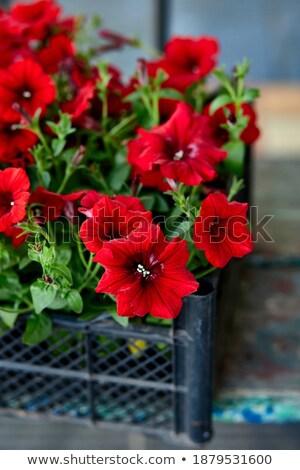 Flores preto plástico jardim centro caixas Foto stock © Illia