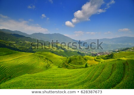 longshen rice fields stock photo © craig