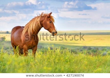 paarden · lopen · blauwe · hemel · groen · gras · voorjaar · zon - stockfoto © taiga
