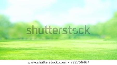 hierba · verde · vista · luz · del · sol · primavera · naturaleza - foto stock © mtkang