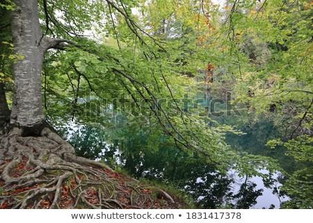 Yeşillik ağaçlar su gökyüzü doğa mavi Stok fotoğraf © Leonardi