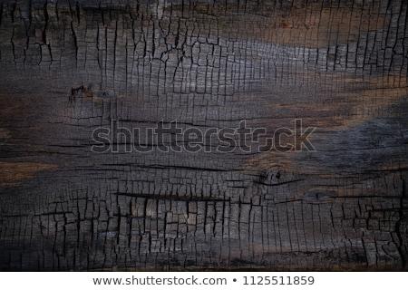 A charred piece of wood. Stock photo © PavelKozlovsky