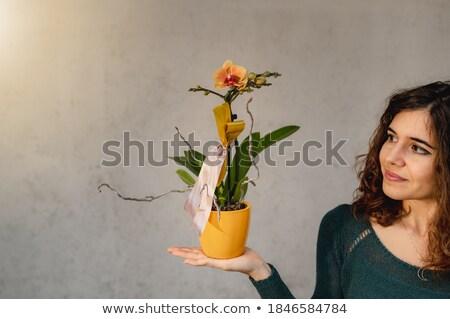 orchidea · luminoso · foto · donna · faccia - foto d'archivio © nejron