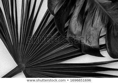 モノクロ · フローラル · モチーフ · エンドレス · テクスチャ - ストックフォト © jet