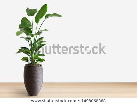 растений ваза интерьер дерево стекла фон Сток-фото © bezikus