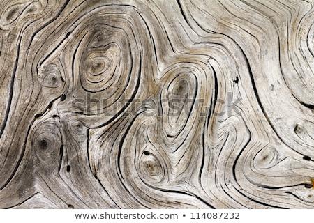 Schors textuur boom zwarte structuur Stockfoto © shutswis