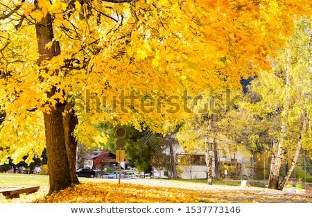 Fák ősz levelek kék ég fa fa Stock fotó © Taigi