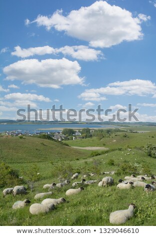 群れ 羊 群れ 丘 セルビア ヨーロッパ ストックフォト © simazoran