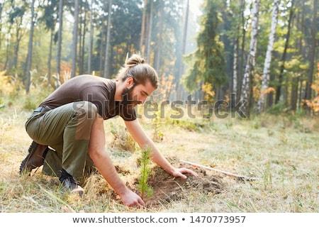 árvore · natureza · deserto · terra · indústria · futuro - foto stock © lightsource