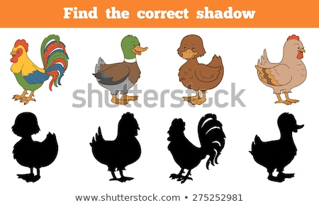 Kids animal learning game, find the correct shadow Stock photo © adrian_n