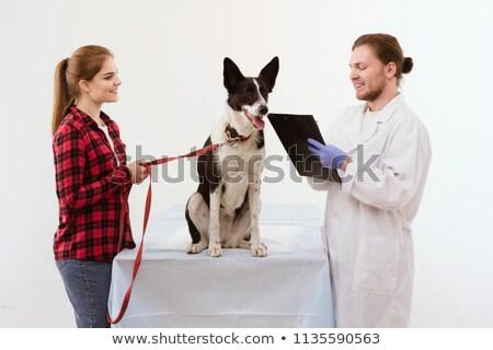 Mulher veterinário cativeiro gatinho escritório Foto stock © wavebreak_media