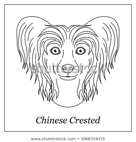 Isolated black outline head of chinese crested hairless dog on white background. Line cartoon breed  Stock photo © olkita