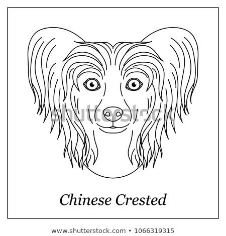 geïsoleerd · zwarte · schets · hoofd · chinese · onbehaard - stockfoto © olkita