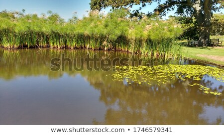 Africa backgrounds with small ponds and trees Stock photo © colematt