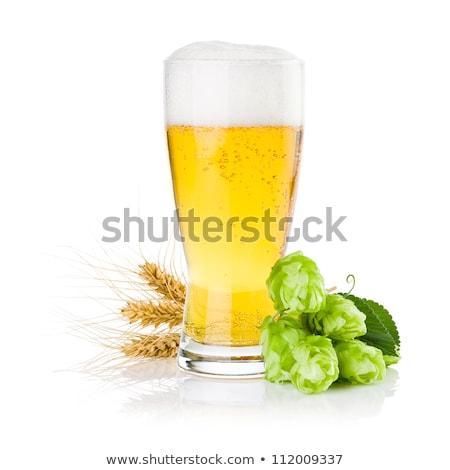 hop · erbe · impianto · usato · fabbrica · di · birra - foto d'archivio © robuart