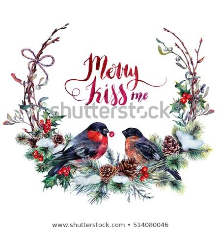 robin couple at Christmas Stock photo © adrenalina