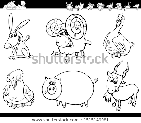 ram farm animal character coloring book Stock photo © izakowski
