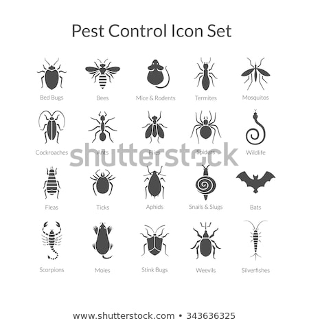 termite icon set Stock photo © bspsupanut