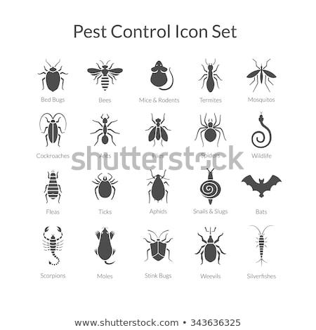 termite icon set stock photo © bspsupanut