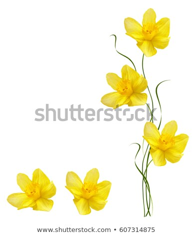 Yellow Flowers Brightly Lit Stock photo © AlessandroZocc