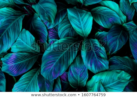 аннотация зеленый цветок Лилия Сток-фото © christina_yakovl