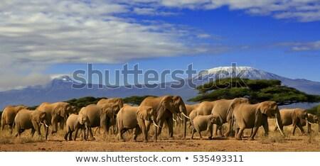 Foto stock: Grande · rebanho · africano · elefantes · potável · rio