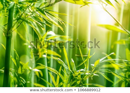Stems of a bamboo forest Stock photo © Arrxxx