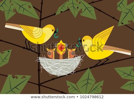 Aç kuş yaratıcı artistik dizayn Stok fotoğraf © indiwarm