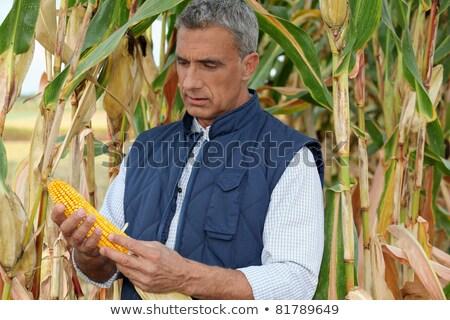 Gazda néz kukoricamező nyár mező kukorica Stock fotó © photography33