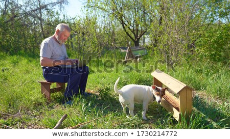 Perro empresario pollo primero lección Foto stock © karelin721