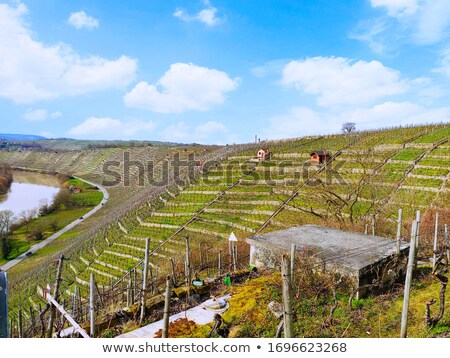 Vineyard cultivation on terraces on hillside  Stock photo © AlessandroZocc