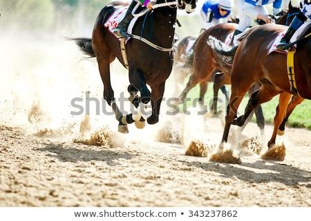Detail of race horse Stock photo © CaptureLight
