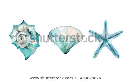 Stock photo: Five seashells