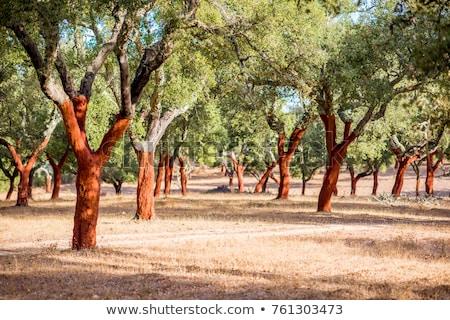 havlama · mantar · meşe · ağaç · ahşap · arka · plan - stok fotoğraf © lianem