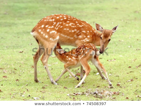 moeder · baby · weide · borstvoeding · groot - stockfoto © kzenon