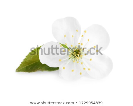biały · jabłko · kwiaty · charakter · liści · piękna - zdjęcia stock © Dserra1