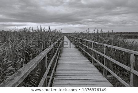 Stock fotó: Széles · távolság · nyitva · út · perem · farm