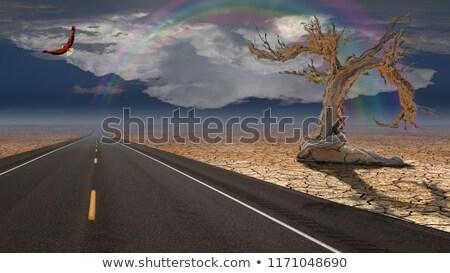 Surreale deserto inverno tempesta Foto d'archivio © emattil