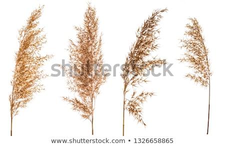 fű · kék · ég · toll · természet · égbolt · tavasz - stock fotó © digoarpi